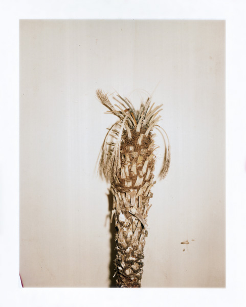 """Pauline Beaudemont. Palm Trunk, neglected. From the series """"Graces"""""""