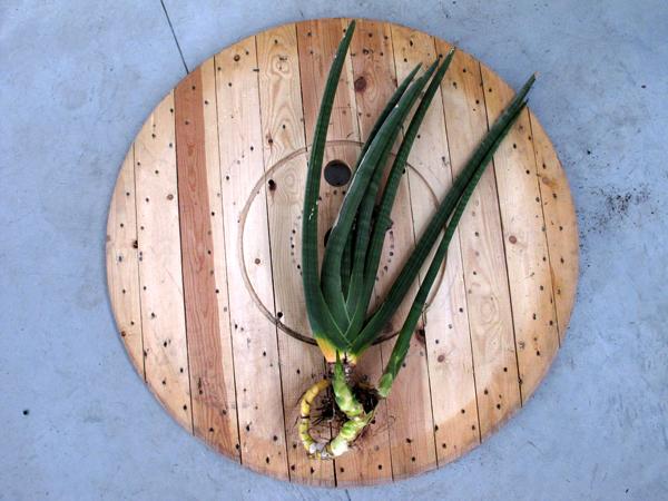 Zootropio – Vênus et Milö, installazione vegetale.
