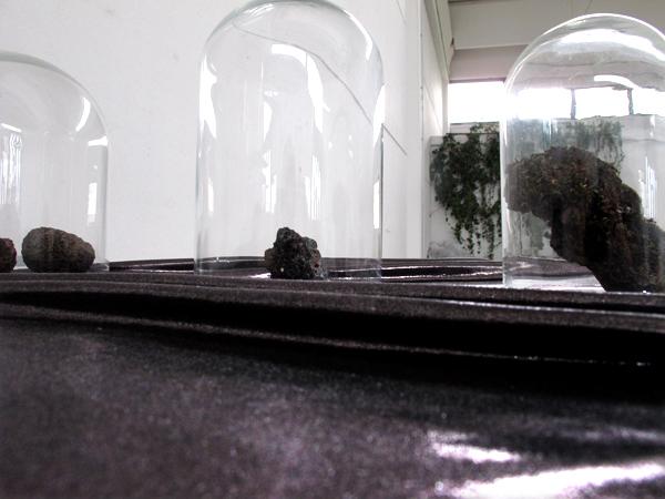 Zootropio – Vênus et Milö, 'Natura: 01', installazione (pietre, campane di vetro, tessuto; particolare), 2011.